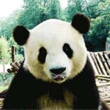 Бар's avatar
