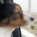 探员's avatar