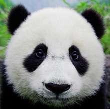 李珣's avatar