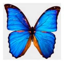 蓝彩蝴蝶's avatar
