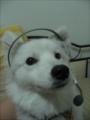 -Vic-'s avatar