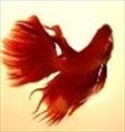 avatar of ianhu