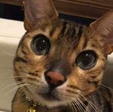 avatar of tetsuo-morimura