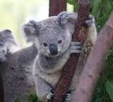 Andy-Koala's avatar