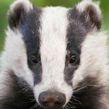 Badger_UK's avatar