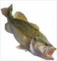 bassfisher6522's avatar