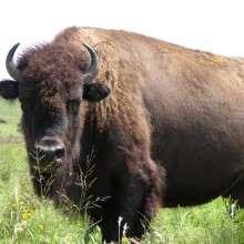 Buffalo246's avatar