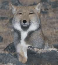 campsun's avatar