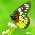 chanchan00920's avatar