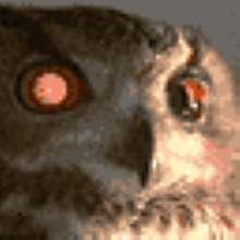 csk73's avatar