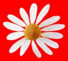 Daisy03's avatar