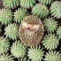 derigel's avatar