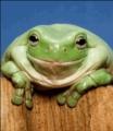 egb2's avatar