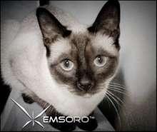 Emsoro's avatar