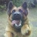 EorscA's avatar