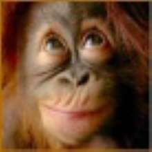 gare's avatar