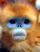 Grumpy_Monkey's avatar
