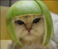japreja's avatar