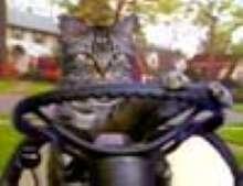 kaborka's avatar