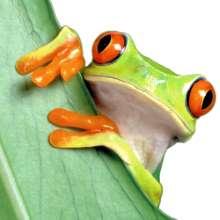 KevKor56's avatar