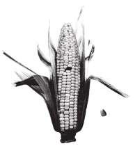 Killragtshirts's avatar