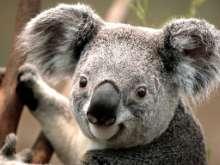 KoalaBear's avatar