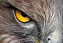 kvaziri's avatar