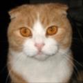 MarkEmery's avatar