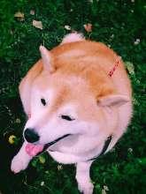 miyamam's avatar