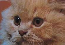 patissiere's avatar