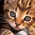 piglet_weiwei's avatar
