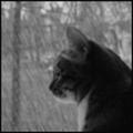 Predator.Cat