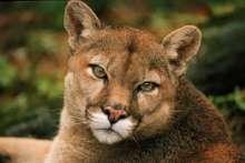 Pumafun's avatar