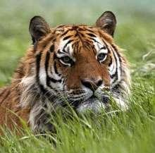 Pushkar_N's avatar