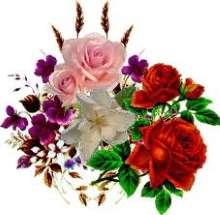 Rose_003's avatar