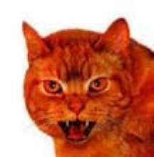 RredCat's avatar