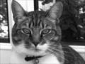 Sasha_The_Cat
