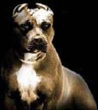 Shadow_dog007's avatar