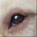 shehan's avatar