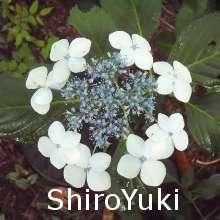 ShiroYuki_Mot's avatar