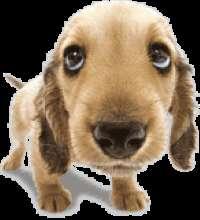 Straydog's avatar