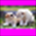 techboyonline's avatar