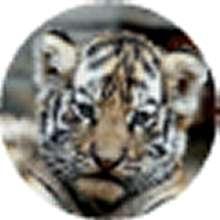 TerriMorgan's avatar