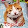 topcat_小喵