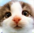 Viki.Yao's avatar