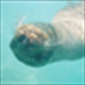 water_rat_'s avatar