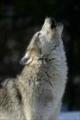 Wolfie2k6's avatar