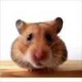 Xanadu83's avatar